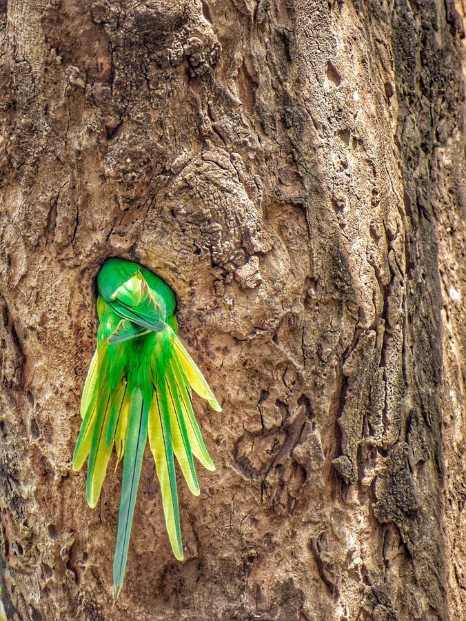 树的温暖的家 免版税图库摄影