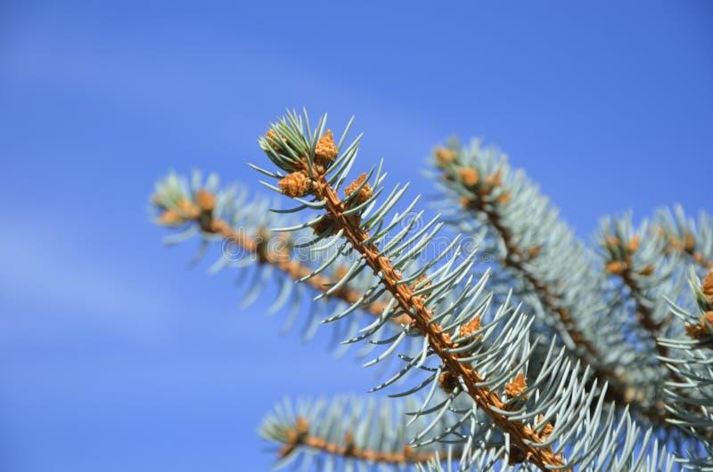 树的片段 免版税库存图片