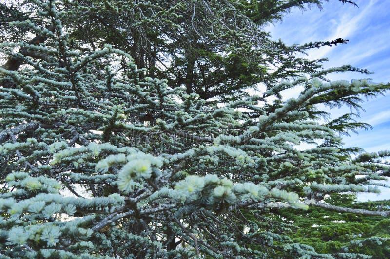 树的纯净 库存照片