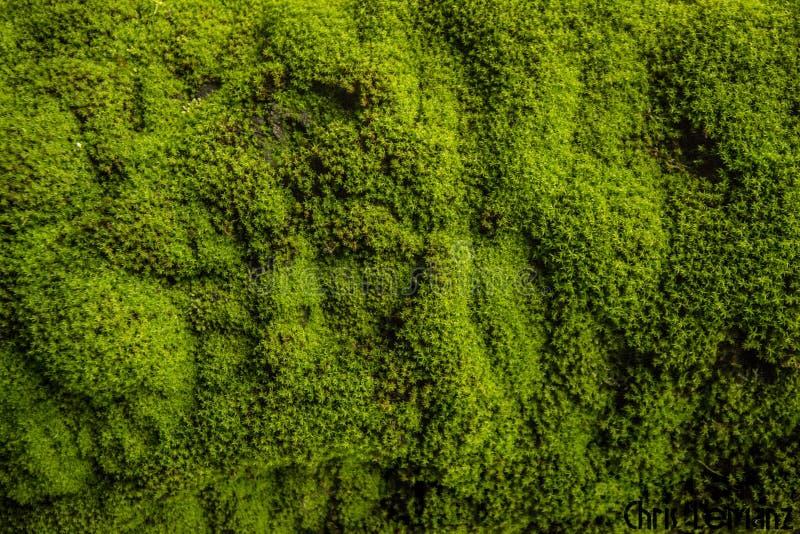 树的细节,纹理摄影,与绿色青苔, 免版税图库摄影