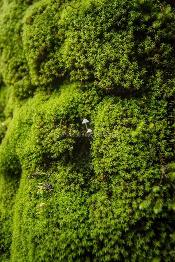 树的细节,纹理摄影,与绿色青苔, 免版税库存图片