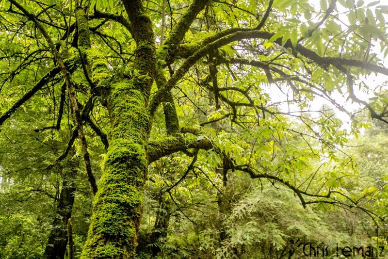 树的细节,纹理摄影,与绿色青苔, 库存图片