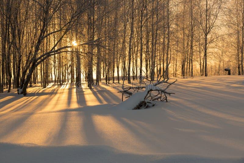 树的长的阴影在雪的 免版税库存图片