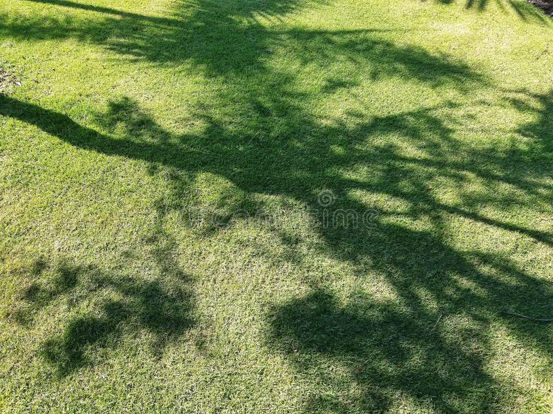 树的阴影在草坪落 免版税库存图片