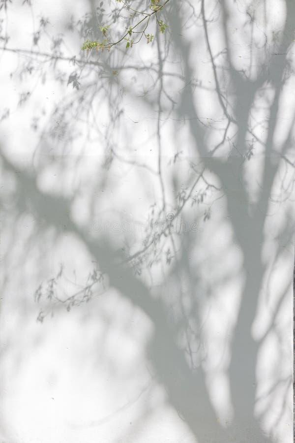 从树的阴影在涂灰泥的墙壁上 免版税库存照片