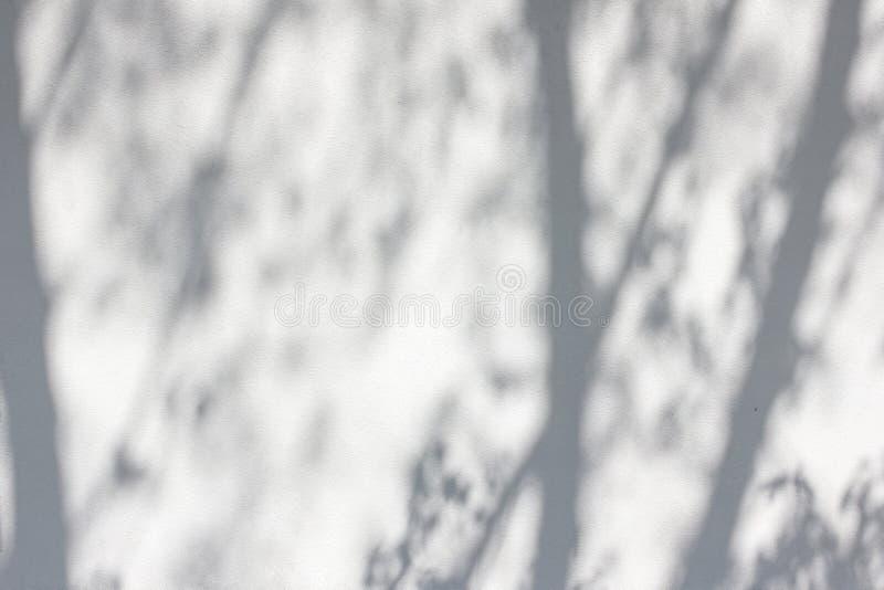 从树的阴影在涂灰泥的墙壁上 免版税库存图片