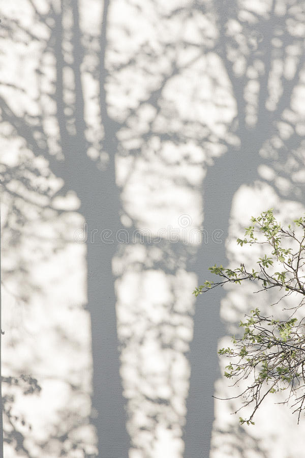 从树的阴影在涂灰泥的墙壁上 库存照片