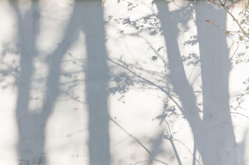 从树的阴影在涂灰泥的墙壁上 库存图片