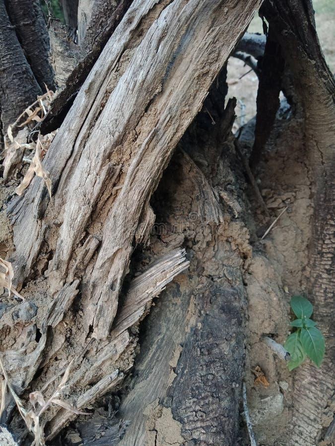 树皮构造了背景,自然风景墙纸 免版税库存图片