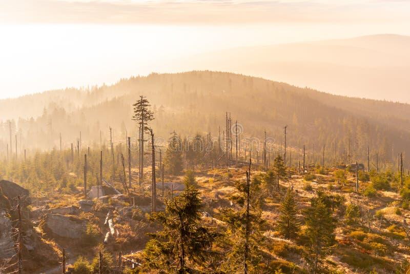 树皮甲虫大批出没caues的Devasted森林  Sumava国立公园和巴法力亚森林,捷克共和国和 免版税库存照片