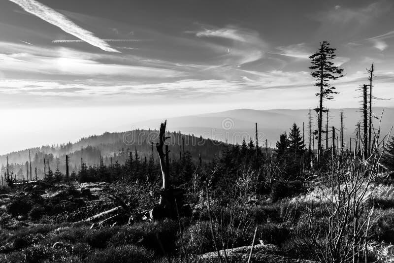 树皮甲虫大批出没caues的Devasted森林  Sumava国立公园和巴法力亚森林,捷克共和国和 免版税库存图片