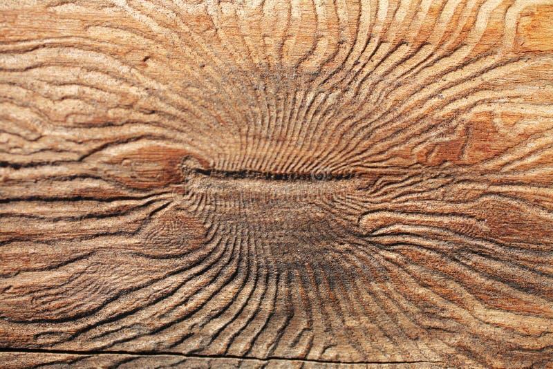 树皮甲虫纹理 免版税库存照片