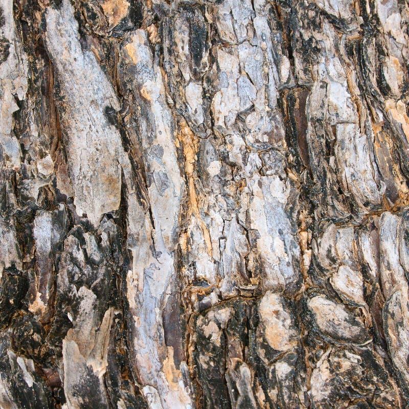 树皮纹理背景  库存照片