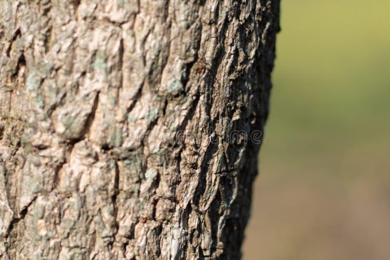 树皮纹理选择聚焦绿色迷离自然背景 免版税图库摄影