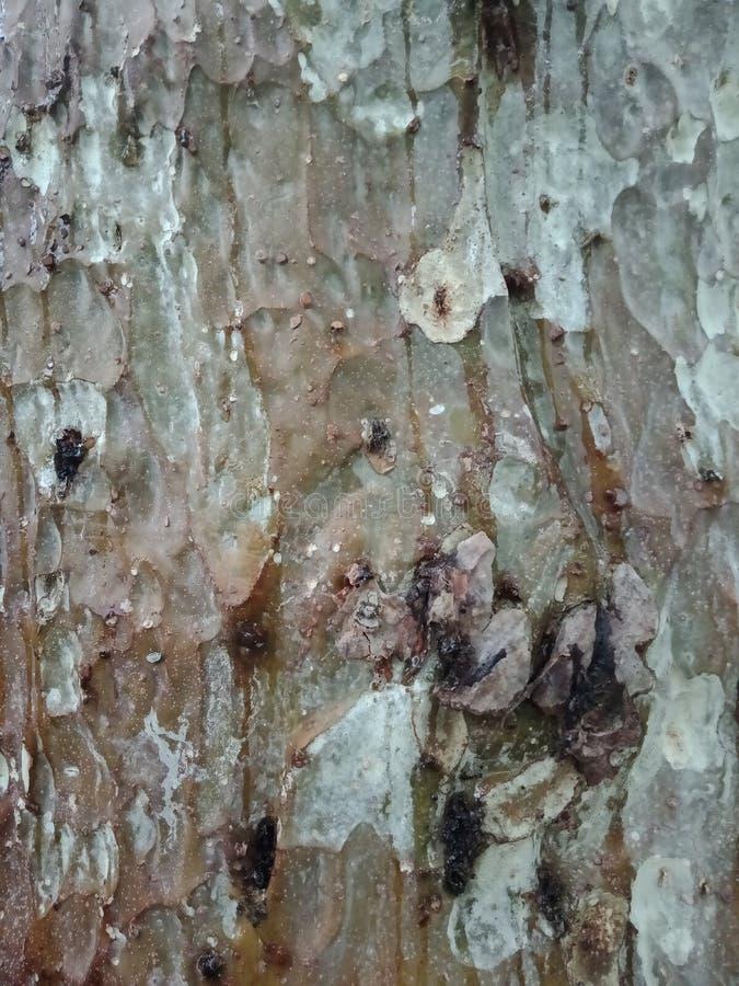树皮纹理,织地不很细背景墙纸 免版税库存照片