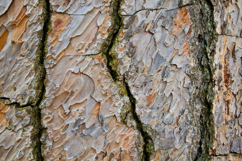 树皮背景纹理 免版税图库摄影