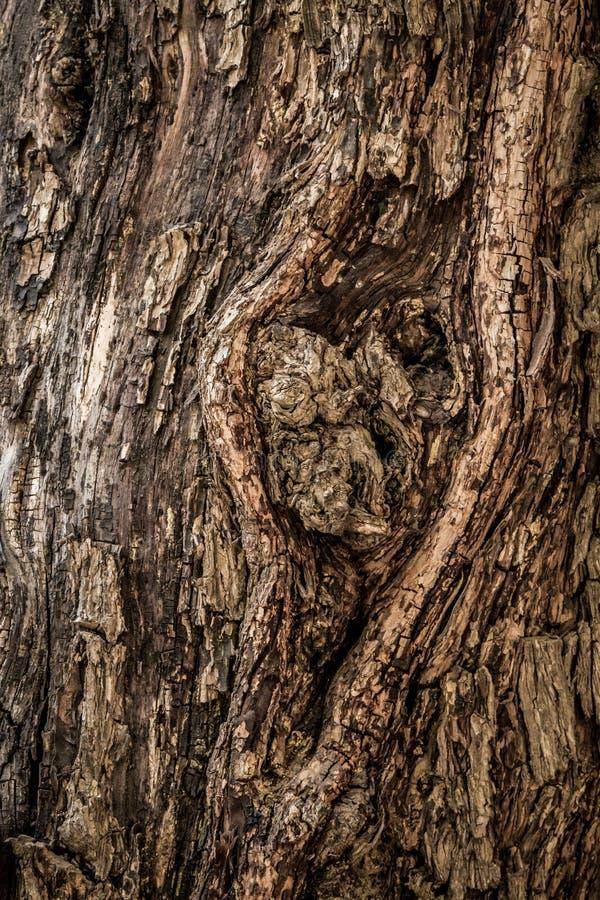 树皮背景 纹理 图库摄影