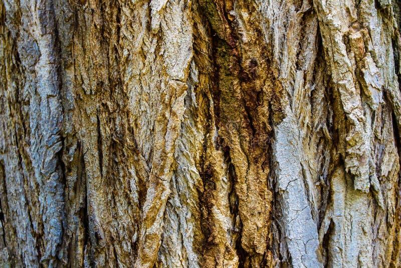 树皮背景 库存照片
