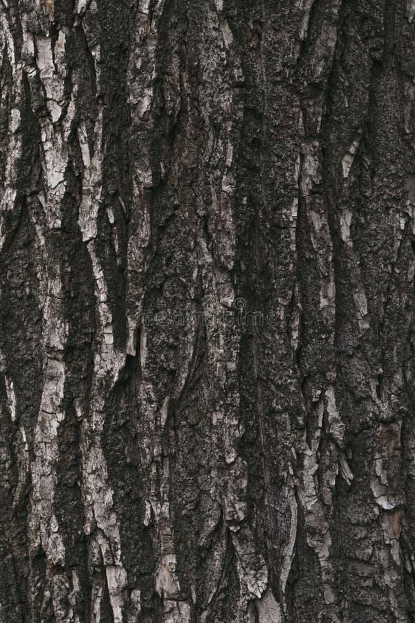 树皮表面,黑暗的纹理  被风化的吠声,破裂的木头的抽象棕色样式 木材粗砺的木词根 肮脏的难看的东西 免版税库存照片