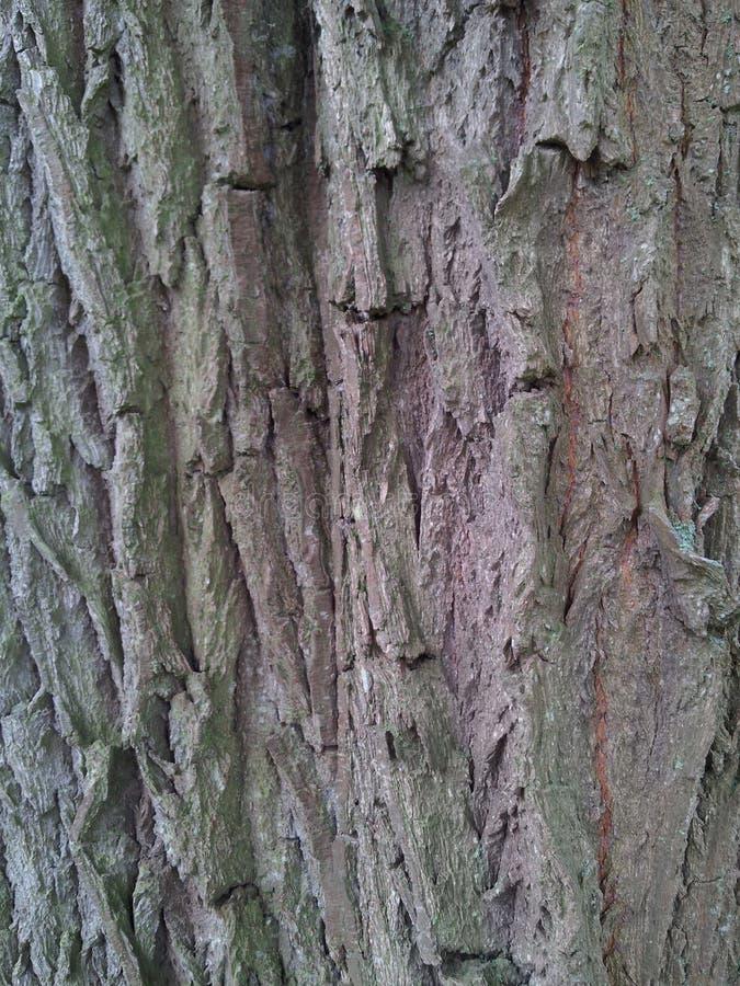 树皮褐色 免版税库存图片