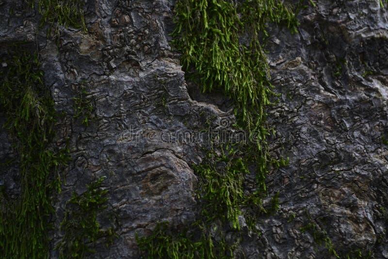 树皮青苔模子 免版税库存图片