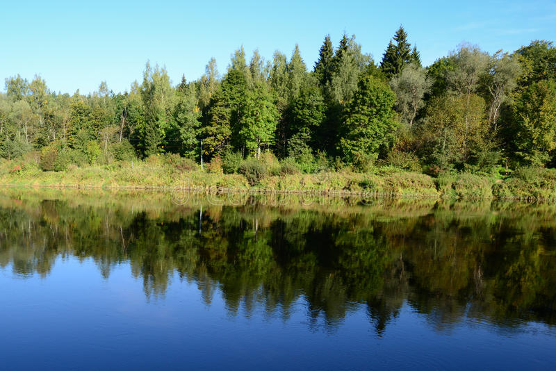 树相称反射在河 库存照片