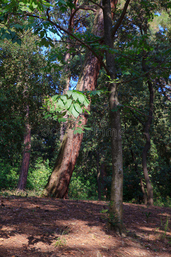 树看法在公园 库存照片