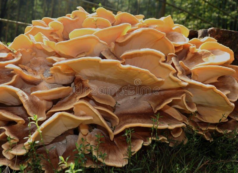 树真菌出于控制 库存图片