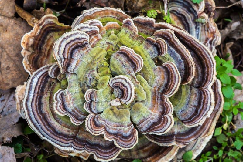 树真菌,蘑菇 免版税库存照片