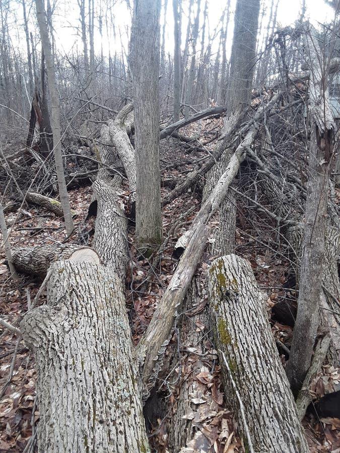 树破坏 免版税库存照片