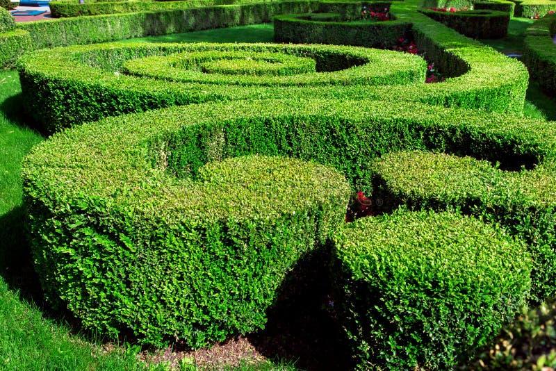 树篱与被整理的灌木的风景设计 免版税库存照片