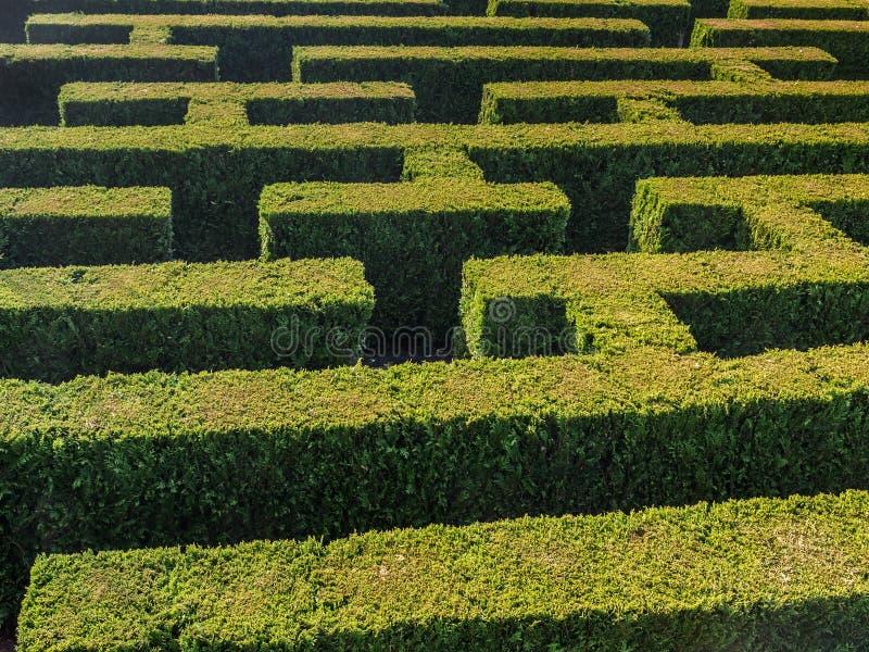 树篱被形成的迷宫 免版税库存图片