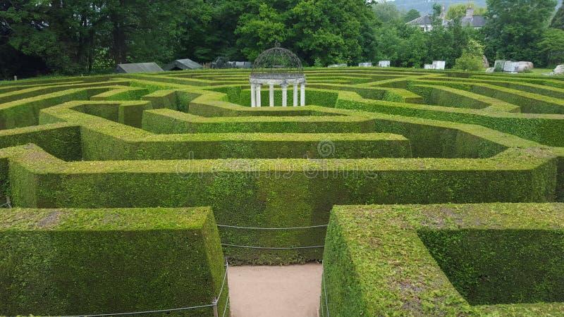 树篱迷宫 库存照片