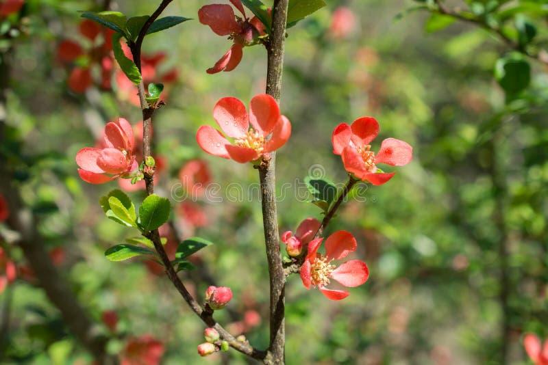 树绽放开花美丽的花在春天. 叶子, 生长.