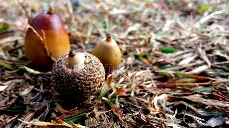 树美丽的种子在地面的在森林里 库存图片
