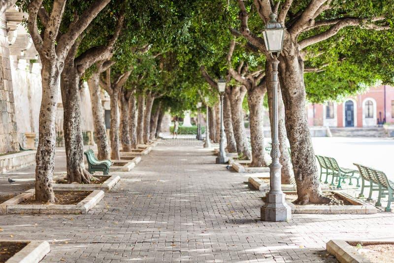 树美丽的胡同沿街道Foro维托里奥Emanuele的II在Ortygia海岛上在西勒鸠斯,西西里岛 库存照片