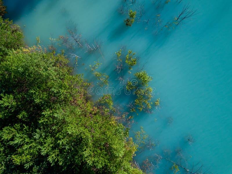 树老太婆空中寄生虫照片生长在tourquoise水,俄罗斯中的 免版税图库摄影