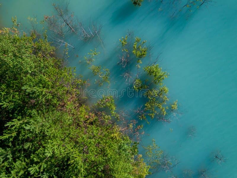 树老太婆空中寄生虫照片生长在tourquoise水,俄罗斯中的 免版税库存图片