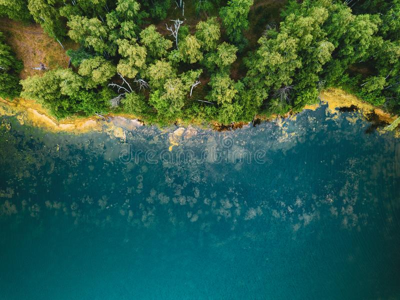 树老太婆空中寄生虫照片生长在tourquoise水,俄罗斯中的 免版税库存照片