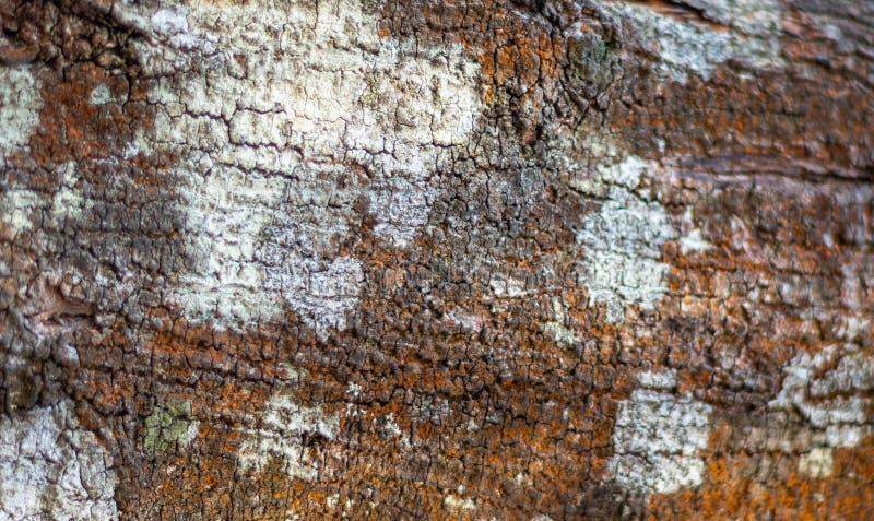 树肤色样式 图库摄影