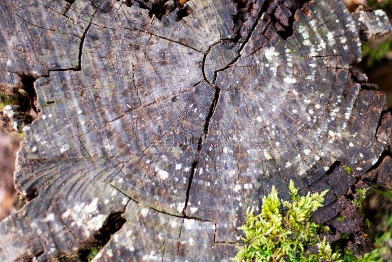 树背景的破裂和被风化的树干 库存图片