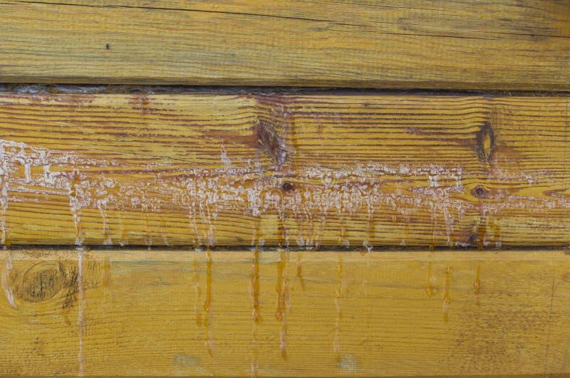 树脂木头 背景由落叶松属木头做成日志站立树脂 库存照片