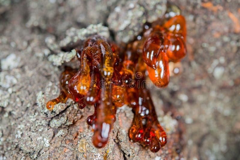 树自然琥珀色的树脂 图库摄影