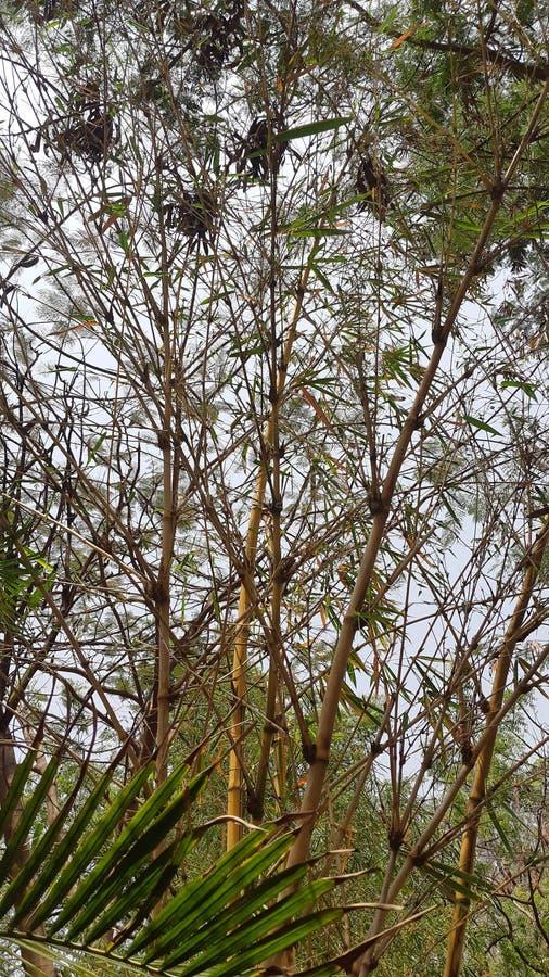 树自然自然秀丽欺骗了绿色森林 库存图片