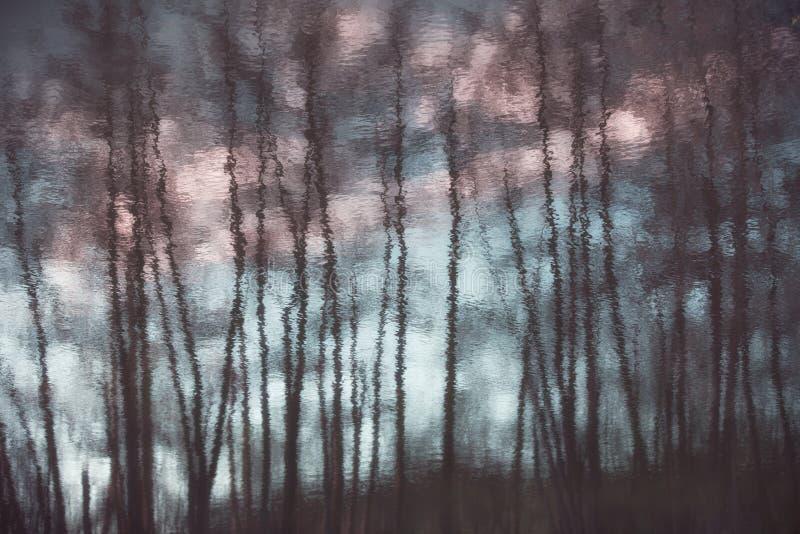 树艺术性的反射剪影  免版税库存照片