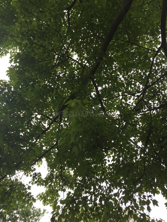 树荫 免版税库存照片