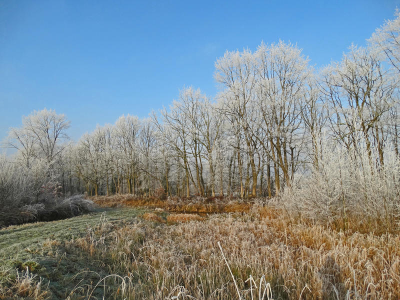 树行在一个冬日 免版税库存照片