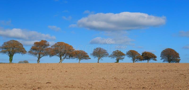 树行在天际的 免版税库存图片