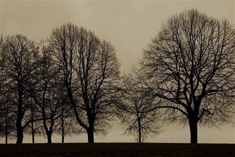 树行在早期的春天由海洋 免版税图库摄影