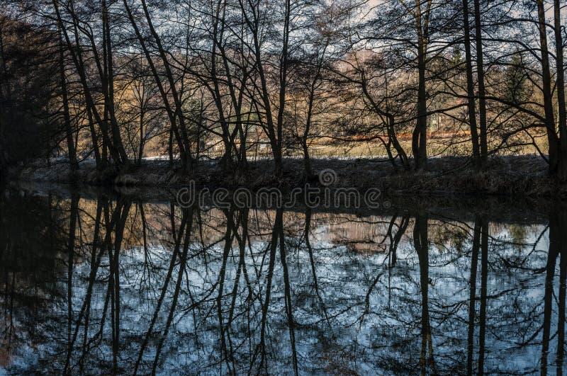 树行的暗影在反射表面上的河的河岸的 免版税库存照片